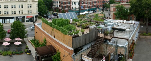 Uncommon Ground rooftop farm.