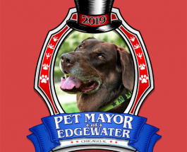 Area Animals Vie To Be Elected First Pet Mayor Of Edgewater