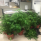 Man Charged For Growing Pot In His Andersonville Home Across From Helen Peirce School